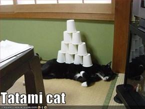 Tatami cat