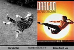 Karate Cat TotallyLooksLike.com Jason Scott Lee