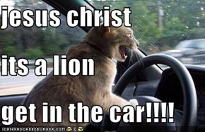 jesus christ its a lion get in the car!!!!