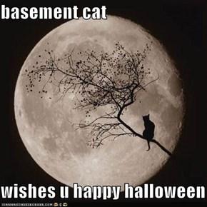 basement cat  wishes u happy halloween