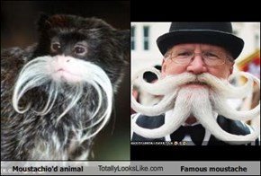 Moustachio'd animal TotallyLooksLike.com Famous moustache
