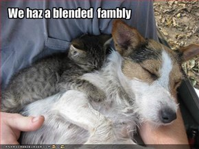 We haz a blended  fambly