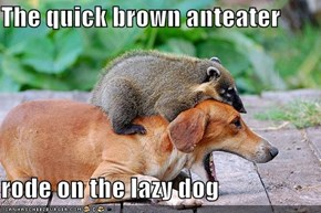 The quick brown anteater  rode on the lazy dog