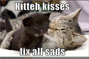 Kitteh kisses  fix all sads
