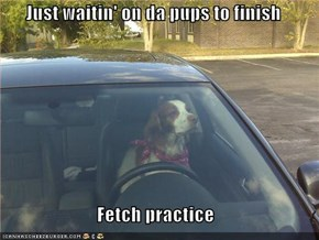 Just waitin' on da pups to finish  Fetch practice