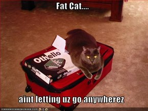 Fat Cat....  aint letting uz go anywherez