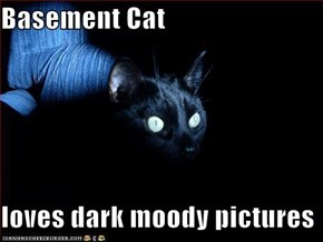 Basement Cat  loves dark moody pictures