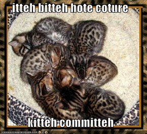 itteh bitteh hote coture  kitteh committeh