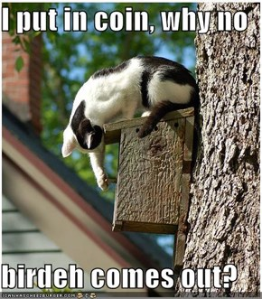 I put in coin, why no  birdeh comes out?