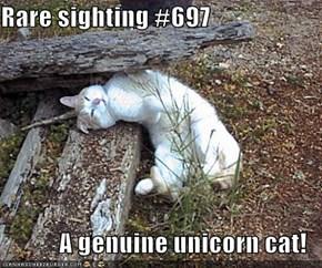 Rare sighting #697  A genuine unicorn cat!