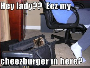 Hey lady??  Eez my   cheezburger in here?