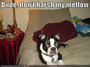Dude, don't harsh my mellow