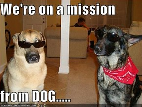 We're on a mission  from DOG.....