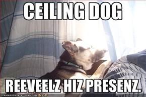 CEILING DOG