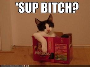 'SUP BITCH?
