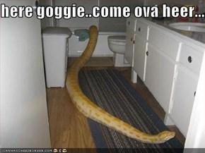 here goggie..come ova heer.....