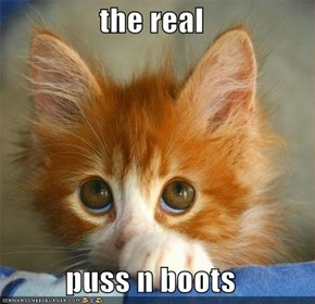 the real  puss n boots