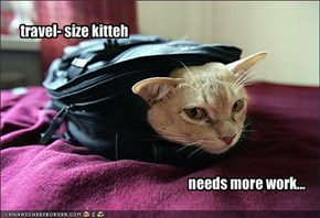 travel- size kitteh