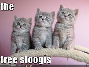 the  tree stoogis