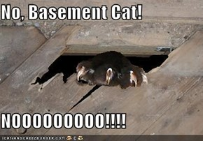 No, Basement Cat!  NOOOOOOOOO!!!!