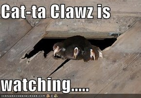 Cat-ta Clawz is   watching.....
