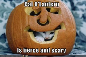 Cat O'Lantern  Is fierce and scary
