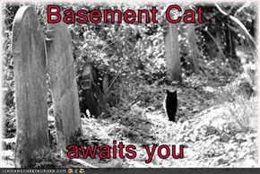 Basement Cat  awaits you