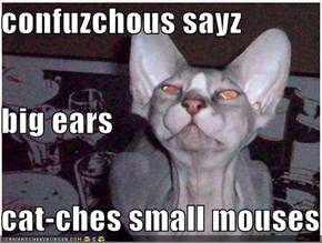 confuzchous sayz big ears cat-ches small mouses