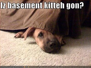 Iz basement kitteh gon?