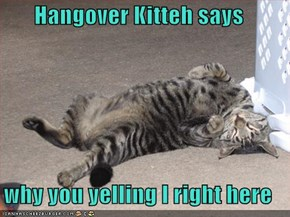 Hangover Kitteh says  why you yelling I right here
