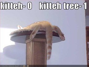 kitteh- 0    kitteh tree- 1