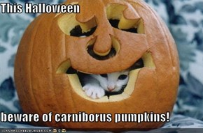 This Halloween  beware of carniborus pumpkins!