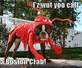 I'z wut yoo call  a Boston Crab!