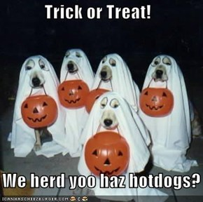 Trick or Treat!     We herd yoo haz hotdogs?