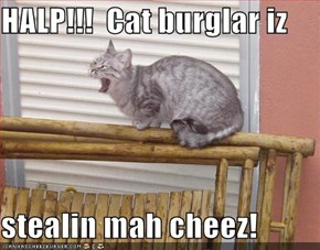 HALP!!!  Cat burglar iz   stealin mah cheez!