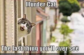 Murder Cat   The last thing you'll ever see