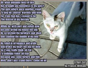 STRAY CAT 