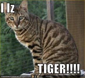 I Iz  TIGER!!!!