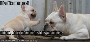 i iz dis manee!  mom, how manee is dis manee?