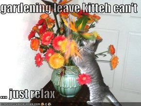 gardening leave kitteh can't  ... just relax
