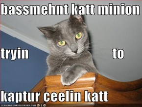 bassmehnt katt minion tryin                              to kaptur ceelin katt