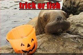 trick or fish