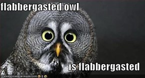 flabbergasted owl  is flabbergasted