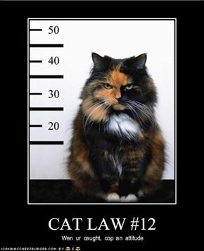 CAT LAW #12