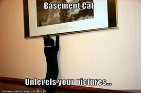 Basement Cat  Unlevels your pictures...