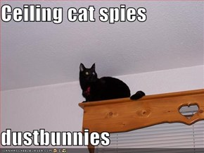 Ceiling cat spies  dustbunnies