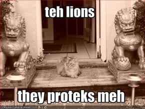 teh lions