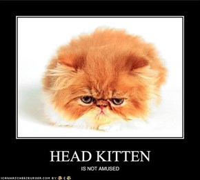 HEAD KITTEN