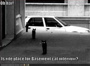 Oh hai!   Is rite place for Basement cat intervuw?