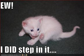 EW!  I DID step in it....